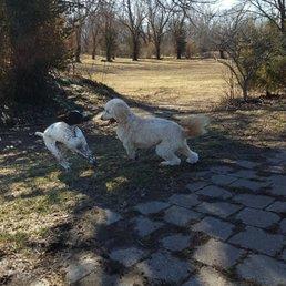 Treecourt Unleashed Dog Park