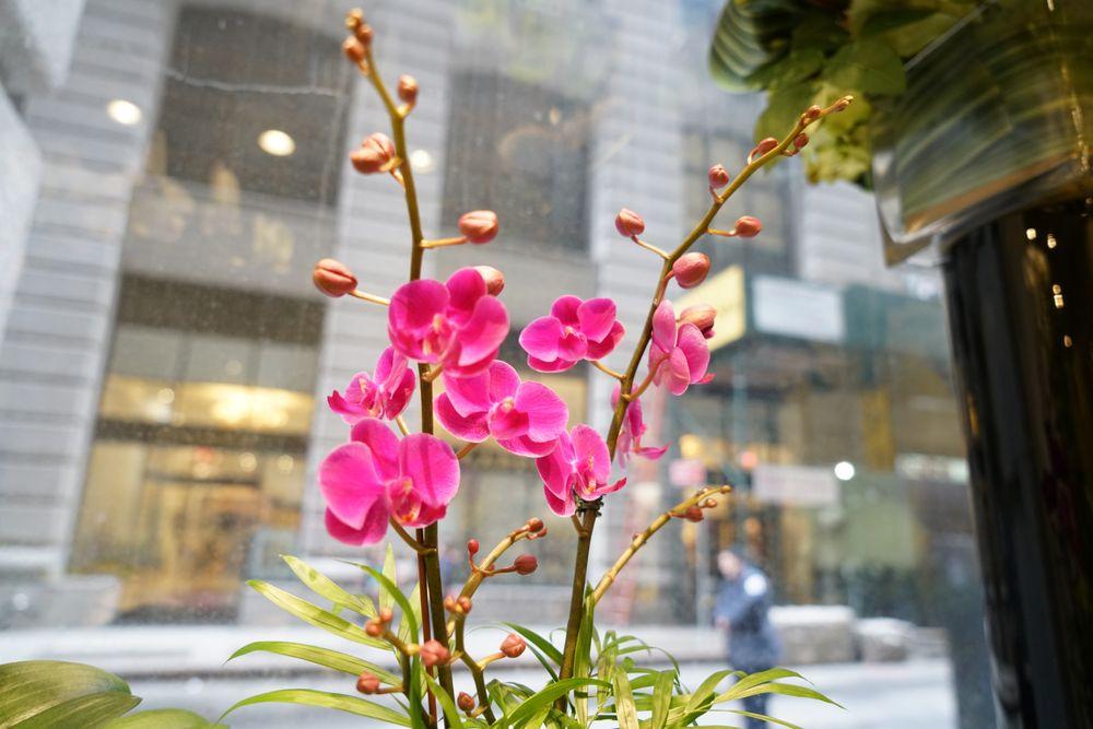 Exchange Flowers