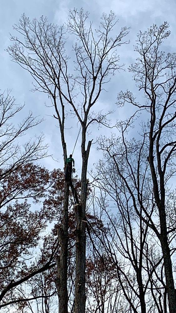 Ax Tree Services: PO Box 1620, Falls Church, VA