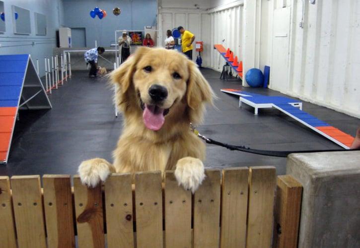 Photos for zoom room dog training yelp
