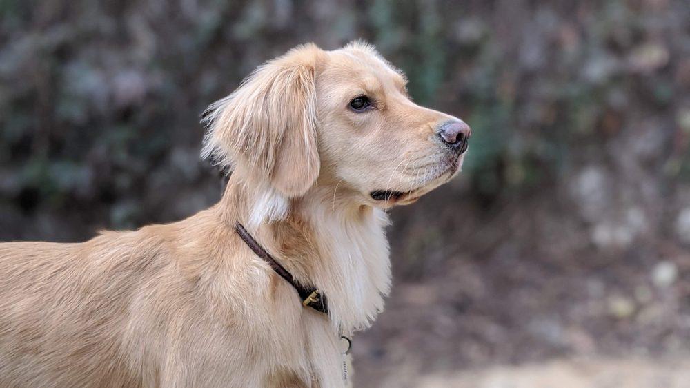 Bark Bath Self-Serve Dog Wash & Toilettage