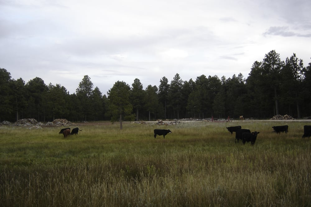 Ayer Ranch TLC: 12558 Meridian Rd, Black Forest, CO