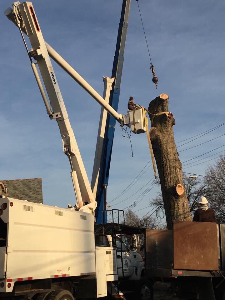 G & A Tree Service: 3400 River Rd, Cincinnati, OH