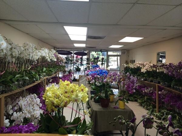 The Best Place In Miami For Flowers Yelp