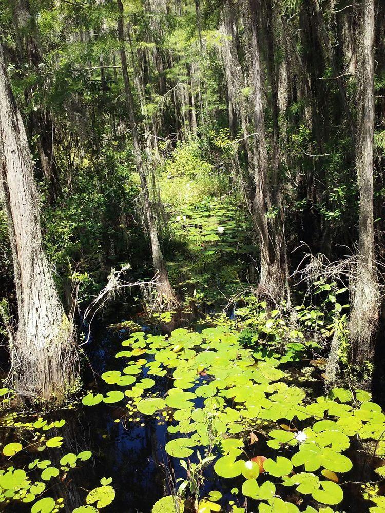Grand Bay Wildlife Management Area: 4641-4649 Knight Academy Rd, Valdosta, GA