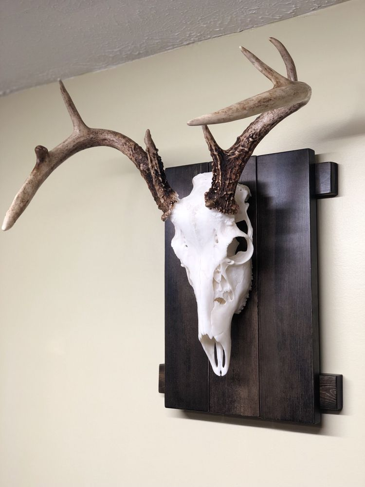 Jordans's Taxidermy and Hydro Dipping: Naples, NY