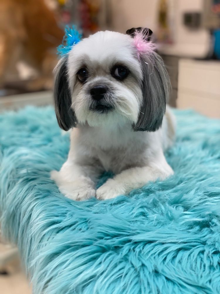 Ooh La La Posh Pets Grooming & Boutique: 94 Carleton Ave, Islip Terrace, NY