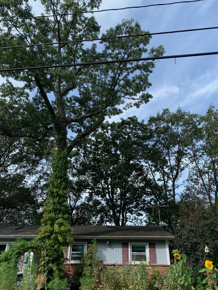 Middenstead Tree Care: Branchville, NJ