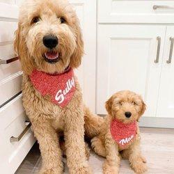 Bella Notte Puppies - 41 Photos - Pet Breeders - 12270