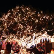 Christmas Tree Lane - Christmas Trees - San Carlos, CA - Yelp