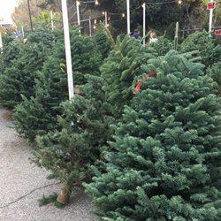 Enchanted Forest Christmas Trees - Christmas Trees - 444 W Alma ...