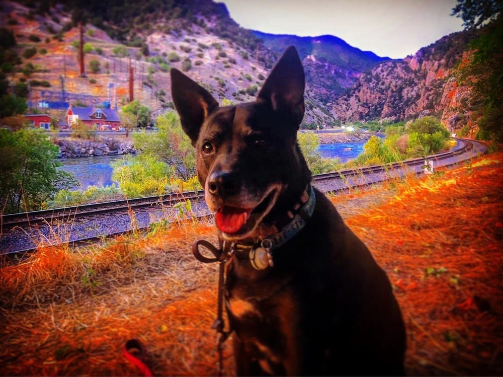 Grand Valley Veterinary Services: 1275 13 1/2 Rd, Loma, CO