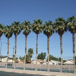 palm trees closed tree services southeast las vegas nv