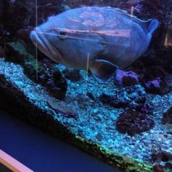 aquarium aquarium 5 boulevard de la jet 233 e canet en roussillon pyr 233 n 233 es orientales yelp