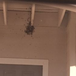 Photo Of Honey Love Bee Removal San Antonio Tx United States Bees