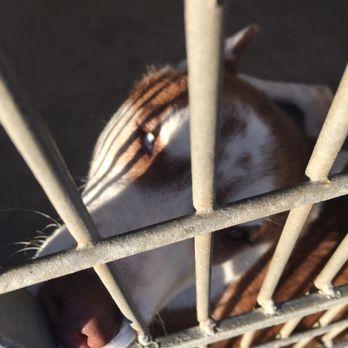 Lucky at Ventura County Animal Services - YouTube |Ventura County Animal Services