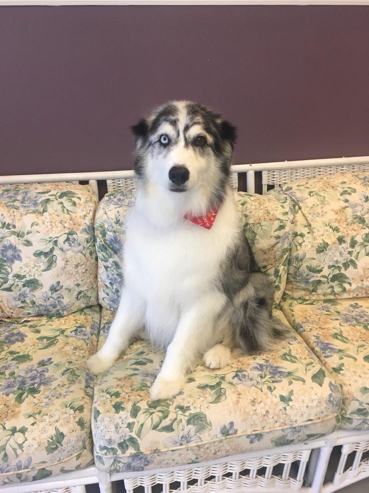 Grateful Dog Grooming: 90 Mechanicsville Rd, Hinesburg, VT