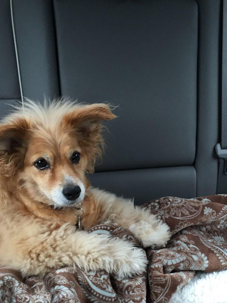 Shea's Pet Grooming: 930 Eaton St, Key West, FL