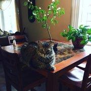 Brazilian Rain Tree Not Photo Of Bonsai Nursery Englewood Co United States