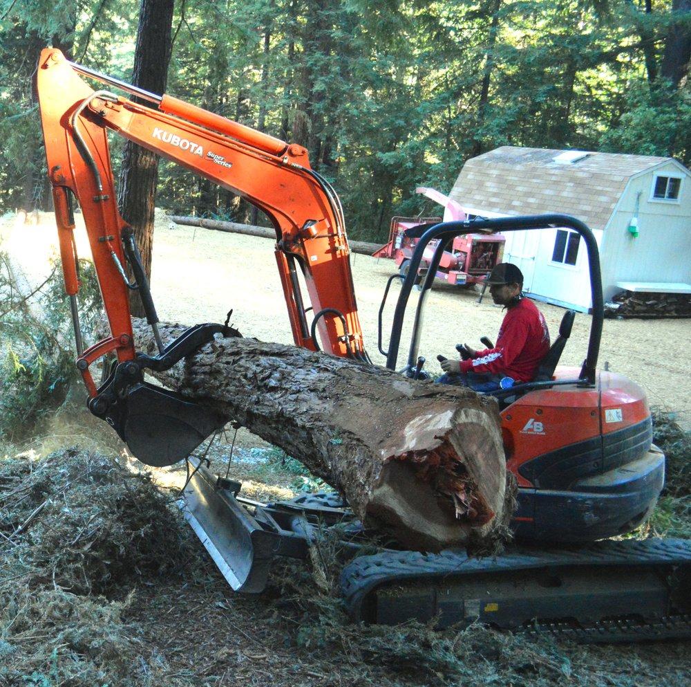 Sunderland Tree: 314 Acorn Dr, Boulder Creek, CA
