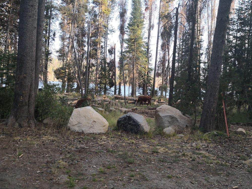 College Campground: Huntington Lake Rd, Fresno, CA