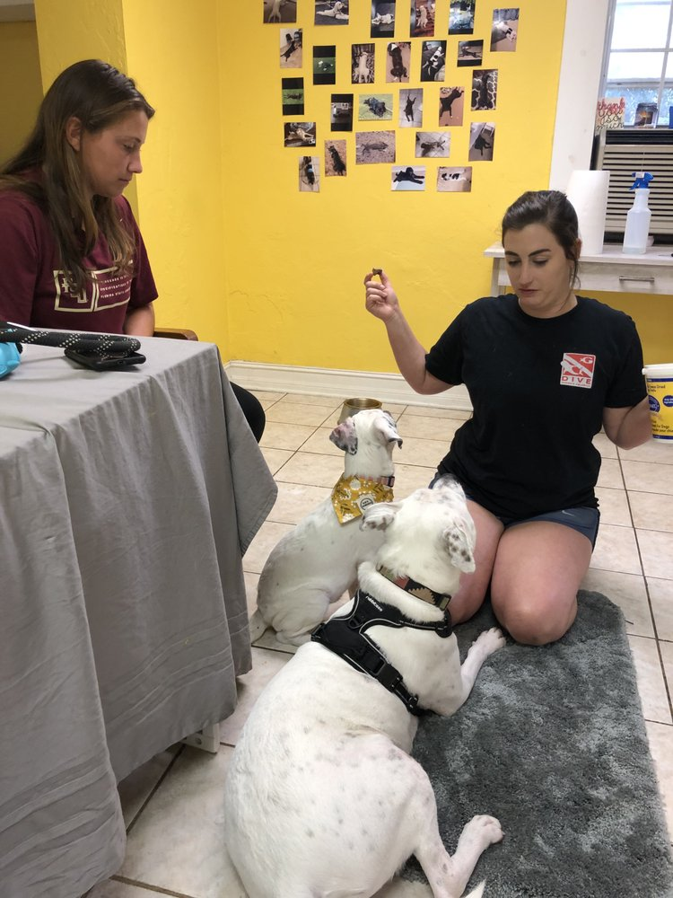 Morgan's Dog Training: 683 Industrial Dr, Tallahassee, FL