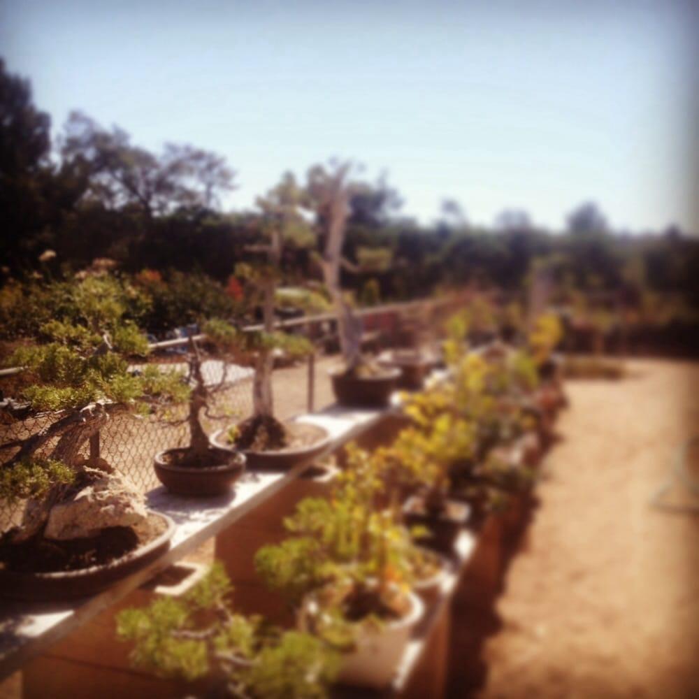 Muranaka Bonsai Nursery - Nurseries & Gardening - 419 Pajaro Ln ...