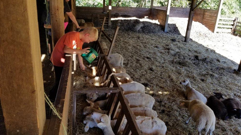 Leaping Lamb Farm: 20368 Honey Grove Rd, Alsea, OR
