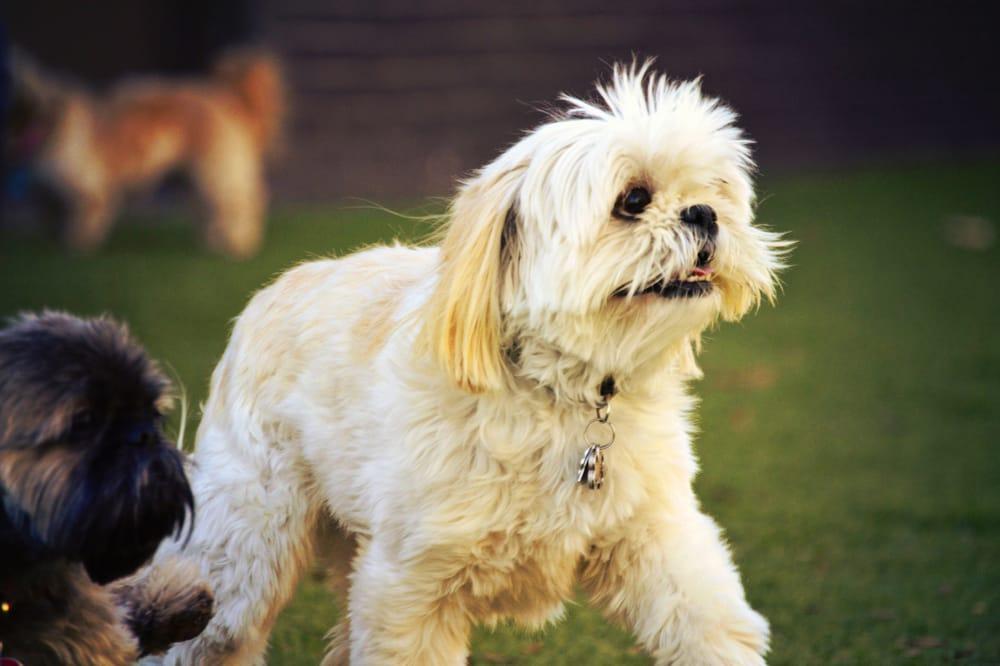 Social Pack Dogs: 2408 Tarpley Rd, Carrollton, TX