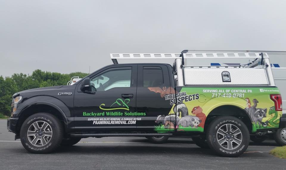 Backyard Wildlife Solutions