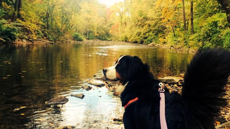 Creature Comforts Pet Sitting: Ardmore, PA