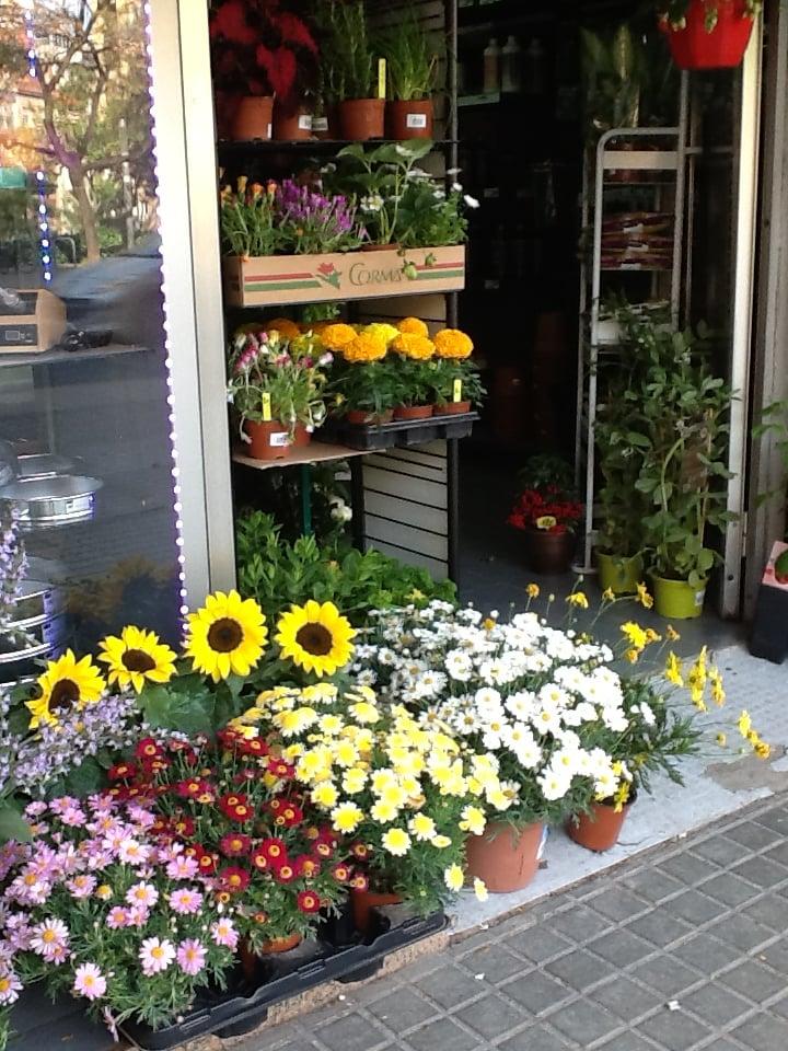 Barnaplant grow shop viveros y jardiner a passeig de for Viveros barcelona