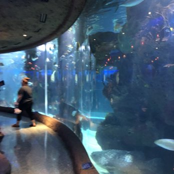 Photo Of Aquarium Restaurant Nashville Tn United States