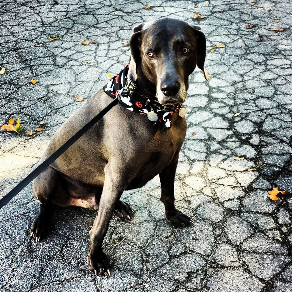 Puff & Fluff Pet Service: Hopkinton, MA