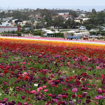 The Flower Fields   Temp. CLOSED   3180 Photos U0026 660 Reviews   Venues U0026  Event Spaces   5704 Paseo Del Norte, Carlsbad, Carlsbad, CA, United States    Phone ...