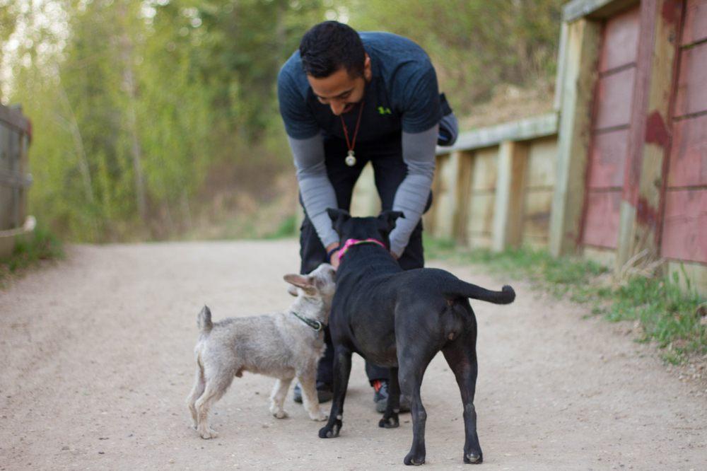 Naughty Boyz Dog Training: 5805 Gateway Blvd NW, Edmonton, AB