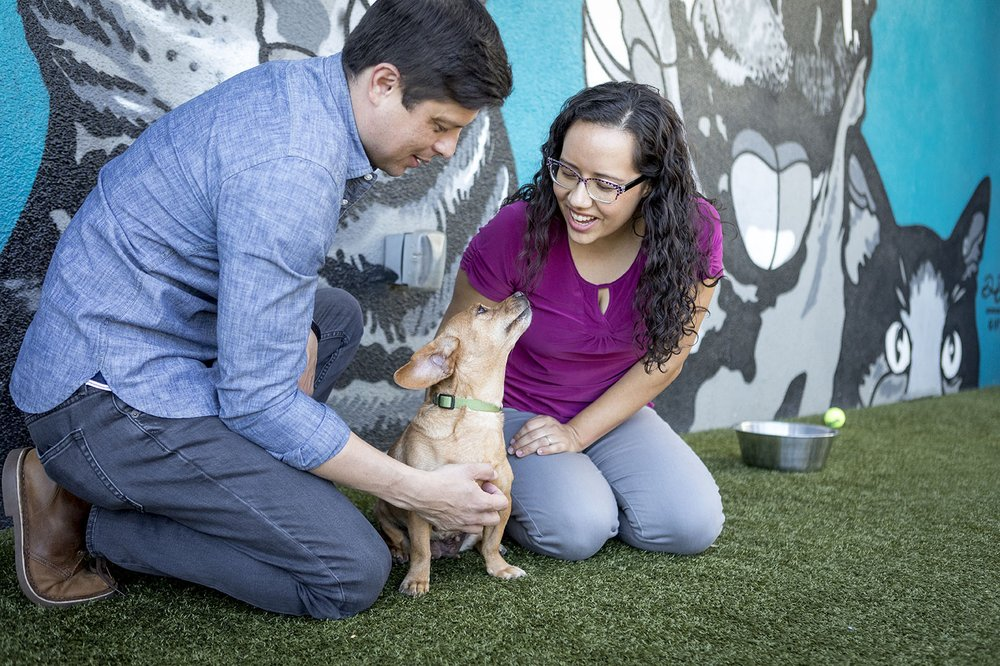 Michelson Found Animals Adopt and Shop