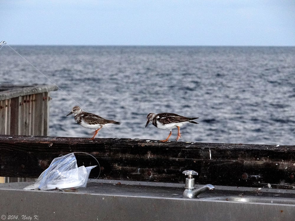 There is a fish cleaning station including sinks if you for Pompano fishing pier