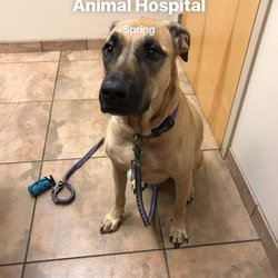 Photo Of Vca Woodlands Animal Hospital Spring Tx United States Checkup Time
