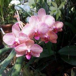 Unc Charlotte Botanical Gardens 47 Photos 16 Reviews Botanical Gardens 9090 Craver Rd