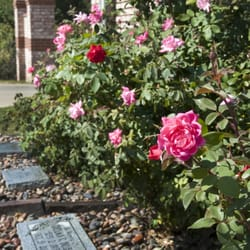 Rolling Oaks Memorial Gardens Funeral Services