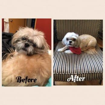 Happy Dog Grooming Spa - 19 Photos & 22 Reviews - Pet ... - photo#17