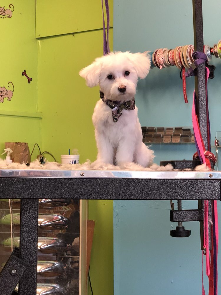 Suzys Grooming: 212 S Miami Ave, Cleves, OH