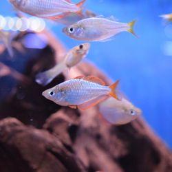 Pisces Exotic Pets - 96 Photos - Aquarium Services - 9255 Baseline