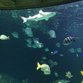 Sea Life Kansas City Aquarium 53 Photos 74 Reviews