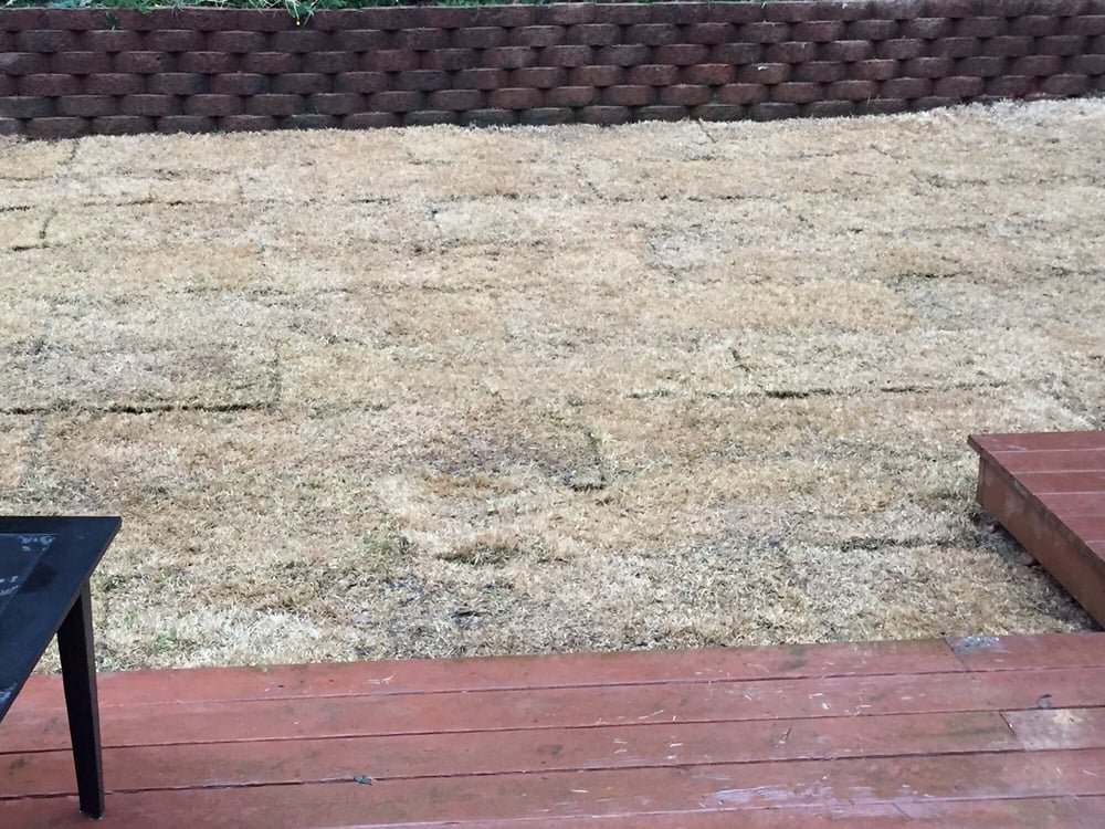 how to put in sod