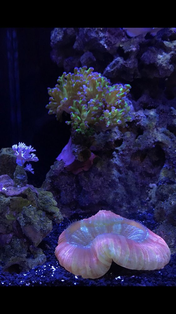 Coral Gazers: 15461 Red Hill Ave, Tustin, CA