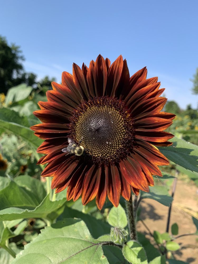 Social Spots from Summers Farm