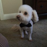 Dog Gone Cute Grooming Bowtique Niceville Fl