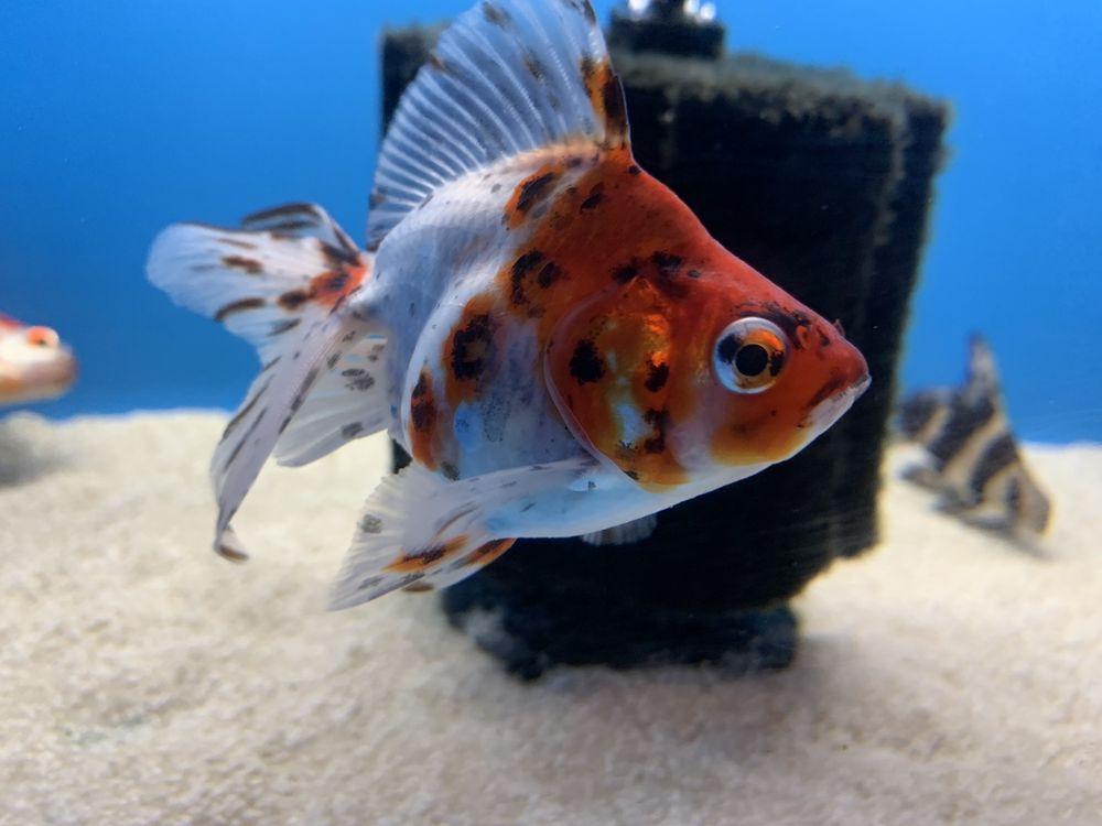 Aquarium & Reptile Depot: 8201 Auburn Blvd, Citrus Heights, CA